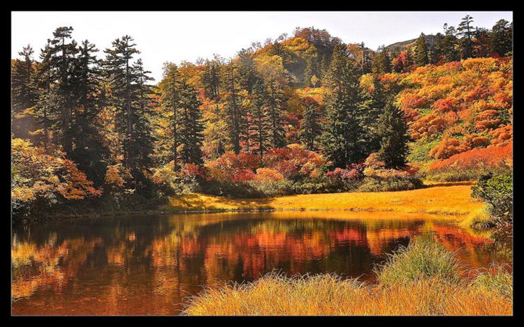 ฤดูใบไม้เปลี่ยนสี, ญี่ปุ่น