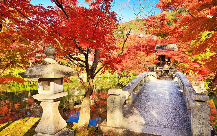 ใบไม้เปลี่ยนสี วัดเออิคันโด, เกียวโต, ญี่ปุ่น