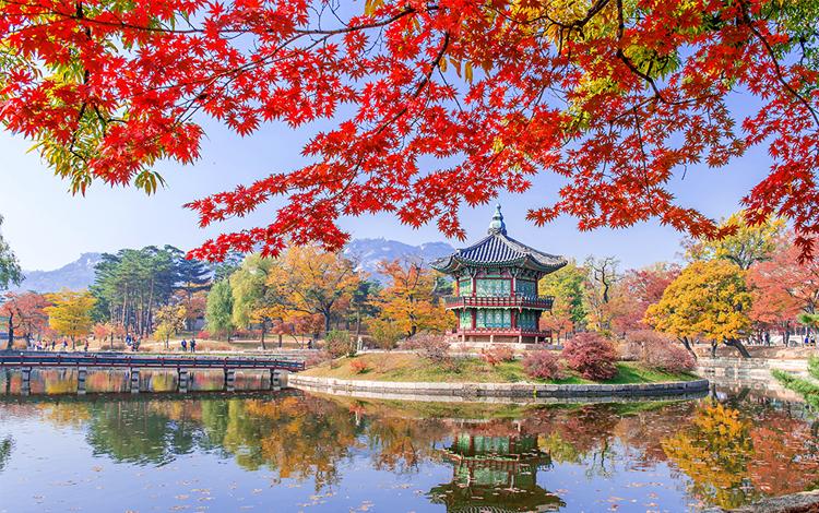 ใบไม้เปลี่ยนสี พระราชวังคยองบกกุง