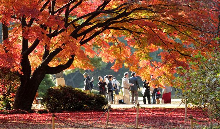 ใบไม้เปลี่ยนสี, สวนริคุงิเอ็น, โตเกียว