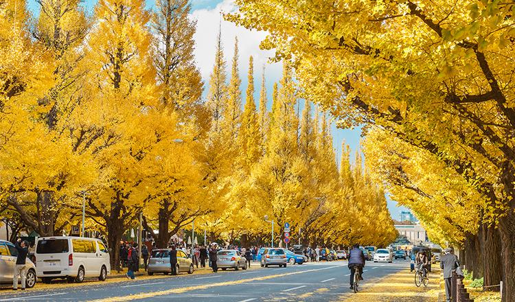ใบไม้เปลี่ยนสี, เมจิจิงงูไกเอ็น, โตเกียว