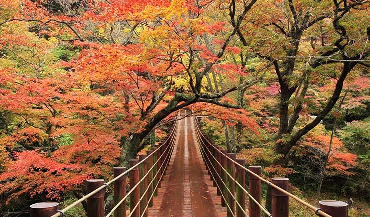 ใบไม้เปลี่ยนสี, หุบเขาฮานานุกิ, อิบารากิ