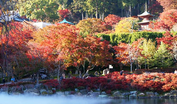ใบไม้เปลี่ยนสี, วัดคัตสึโอจิ, โอซาก้า
