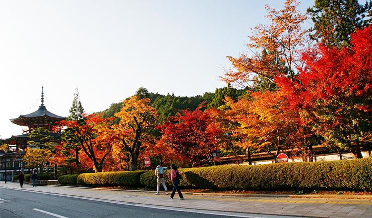 ใบไม้เปลี่ยนสี, โคยะซัง, วากายามะ