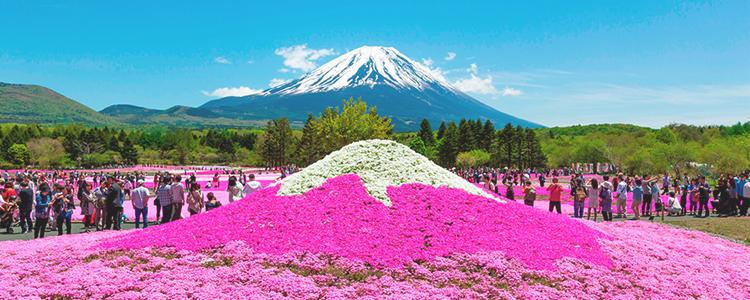 จุดชมดอกชิบะซากุระ, ยามานาชิ