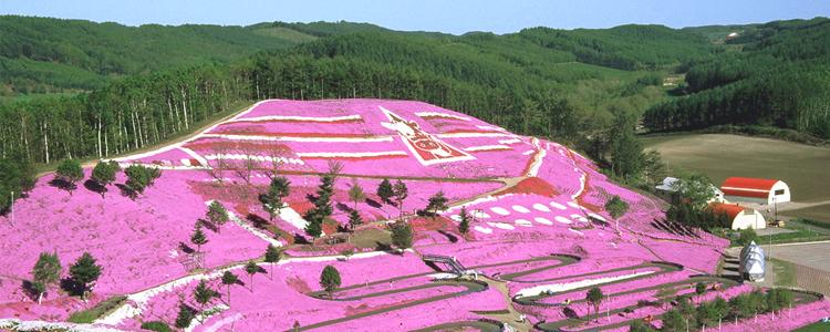สวนฮิงาชิโมโกโต ชิบะซากุระ, ฮอกไกโด
