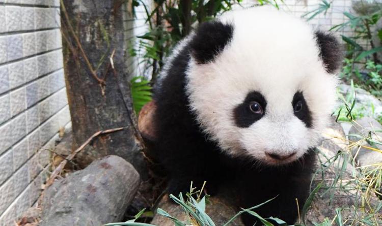 สวนสัตว์ไทเป ไต้หวัน