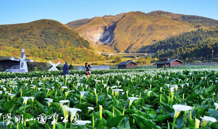 อุทยานแห่งชาติหยางหมิงซาน ไทเป ไต้หวัน