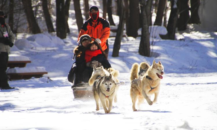 เทศกาลหิมะ, ภูเขาแทแบคซาน, เกาหลีใต้
